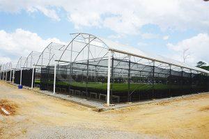 2. Tirnog ES film greenhouse
