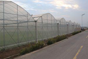Economic high quality polythene greenhouse