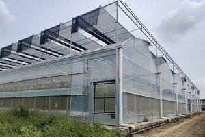 Multi-span film greenhouse