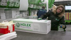 Packing the famous light green boxes