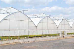 1 Trinog EU Film Greenhouse