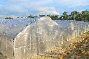 3. Trinog Tunnel film greenhouse