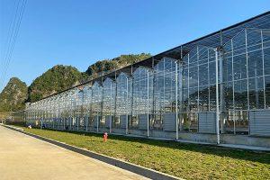 4. Trinog Glass Greenhouse