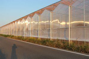 5. Trinog Polycarbonate Greenhouse