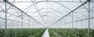 CMF_Serre GreenPush-CMF-Les Sorinières©F.Dantart-S09-18