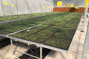 Moveable seeding table